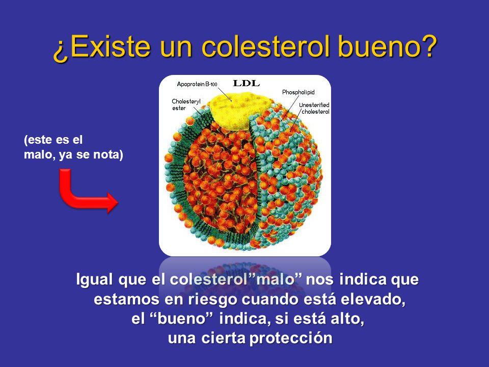 ¿Existe un colesterol bueno? Igual que el colesterolmalo nos indica que estamos en riesgo cuando está elevado, el bueno indica, si está alto, una cier