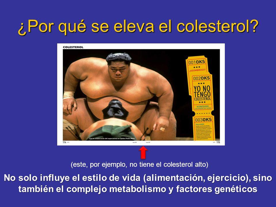 ¿Por qué se eleva el colesterol? No solo influye el estilo de vida (alimentación, ejercicio), sino también el complejo metabolismo y factores genético