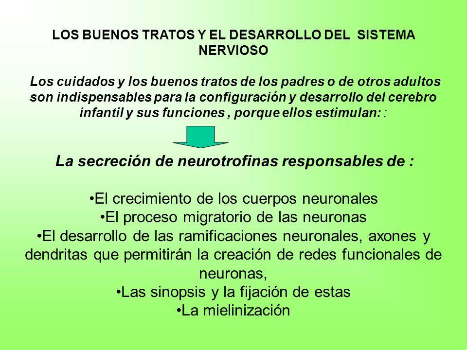 LA ESTIMULACIÓN, RESULTADO DE LOS BUENOS TRATOS INFANTILES ANTES DE LOS TRES AÑOS, SON DETERMINANTES PARA EL DESARROLLO SANO DEL CEREBRO Y DE SUS FUNCIONES Para la maduración y formación de las diferentes áreas cerebrales resultados de las sinapsis y de la mielinización Básico para el desarrollo motor, cognitivo, afectivo y relacional de los niños.