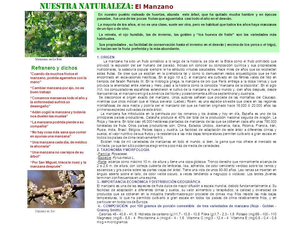 Nuestra Naturaleza: El Manzano En nuestro pueblo rodeado de huertas, abunda este árbol, que ha quitado mucha hambre y en épocas pasadas, fue una de la