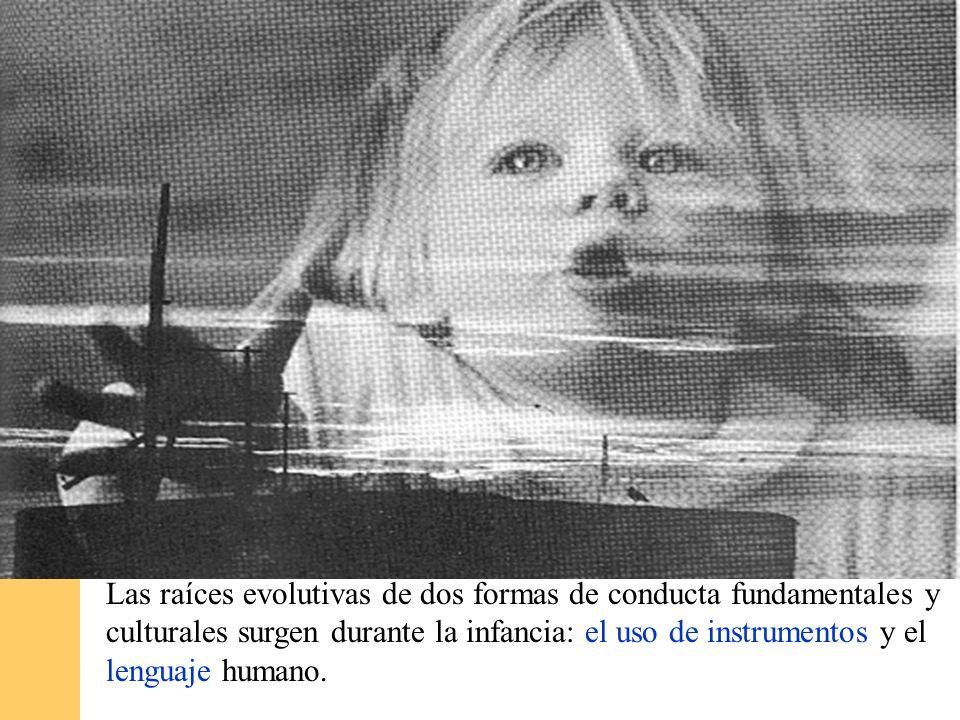 Las raíces evolutivas de dos formas de conducta fundamentales y culturales surgen durante la infancia: el uso de instrumentos y el lenguaje humano.
