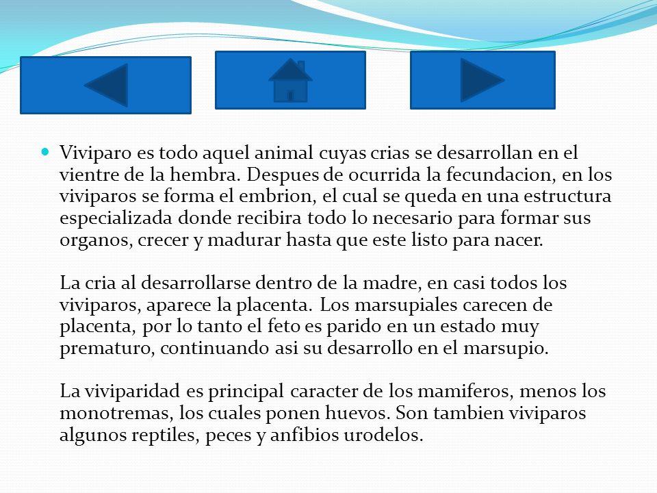 Viviparo es todo aquel animal cuyas crias se desarrollan en el vientre de la hembra. Despues de ocurrida la fecundacion, en los viviparos se forma el