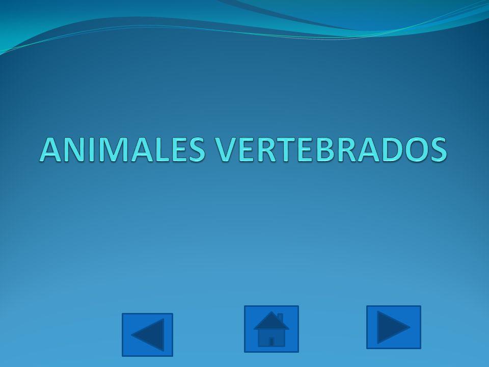 Los vertebrados son un grupo de animales con un esqueleto interno articulado, que actúa como soporte del cuerpo y permite su movimiento.