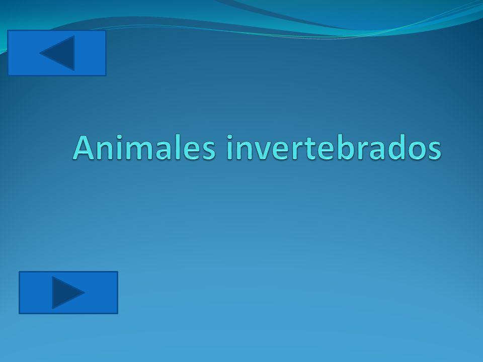 Los animales invertebrados forman el grupo más numerosos de animales.