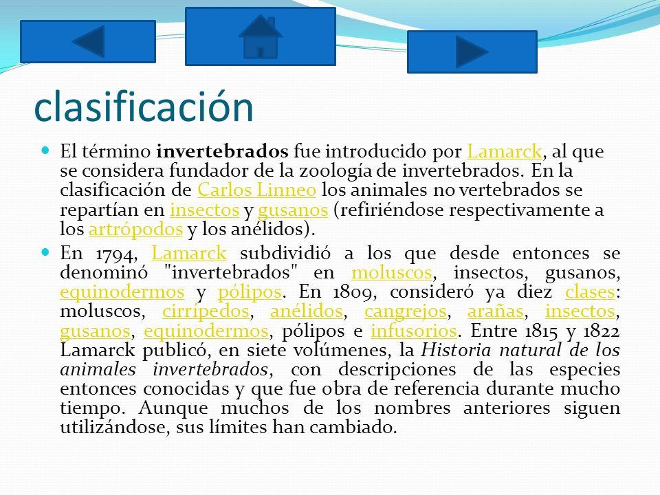 clasificación El término invertebrados fue introducido por Lamarck, al que se considera fundador de la zoología de invertebrados. En la clasificación