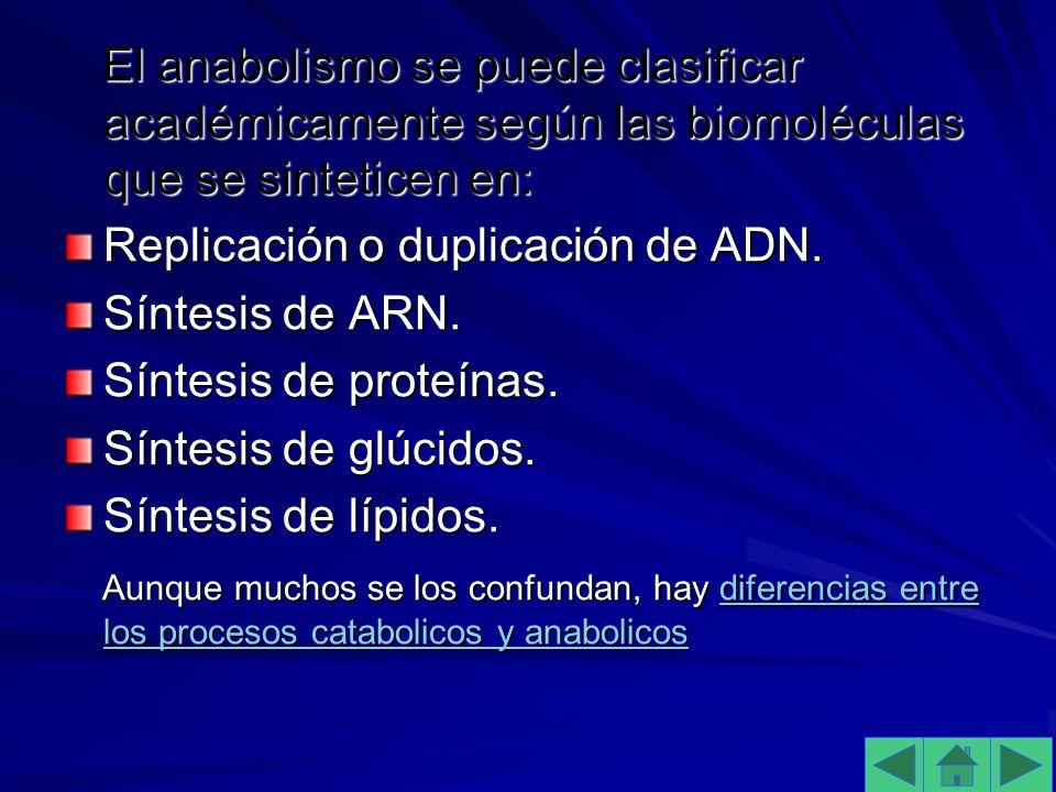 El anabolismo se puede clasificar académicamente según las biomoléculas que se sinteticen en: El anabolismo se puede clasificar académicamente según las biomoléculas que se sinteticen en: Replicación o duplicación de ADN.