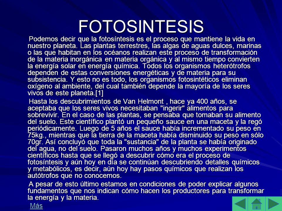 FOTOSINTESIS Podemos decir que la fotosíntesis es el proceso que mantiene la vida en nuestro planeta.