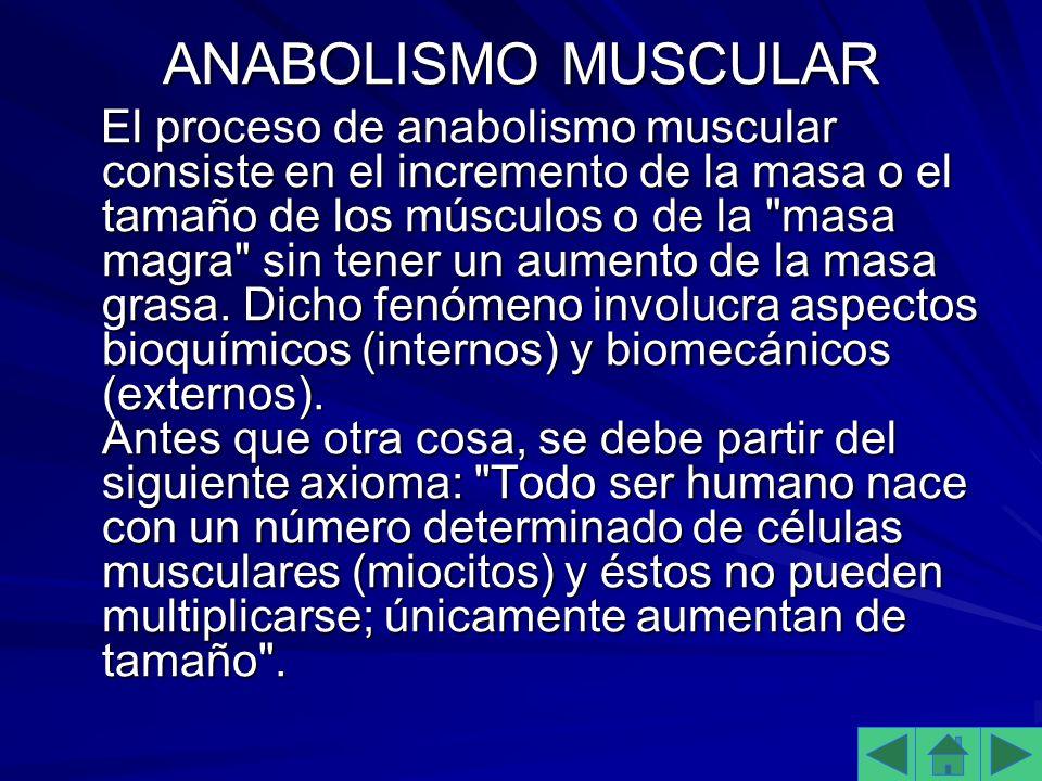 ANABOLISMO MUSCULAR El proceso de anabolismo muscular consiste en el incremento de la masa o el tamaño de los músculos o de la masa magra sin tener un aumento de la masa grasa.