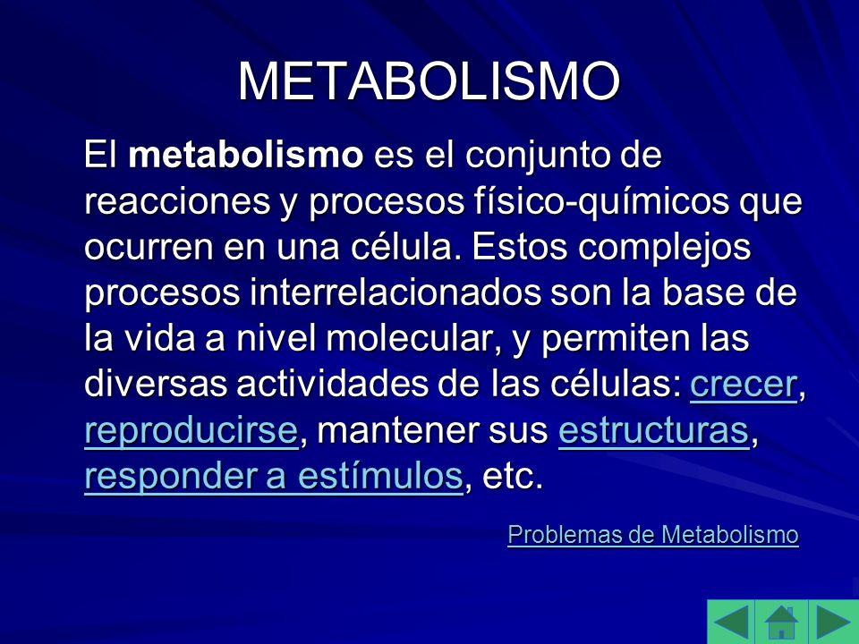 METABOLISMO El metabolismo es el conjunto de reacciones y procesos físico-químicos que ocurren en una célula.