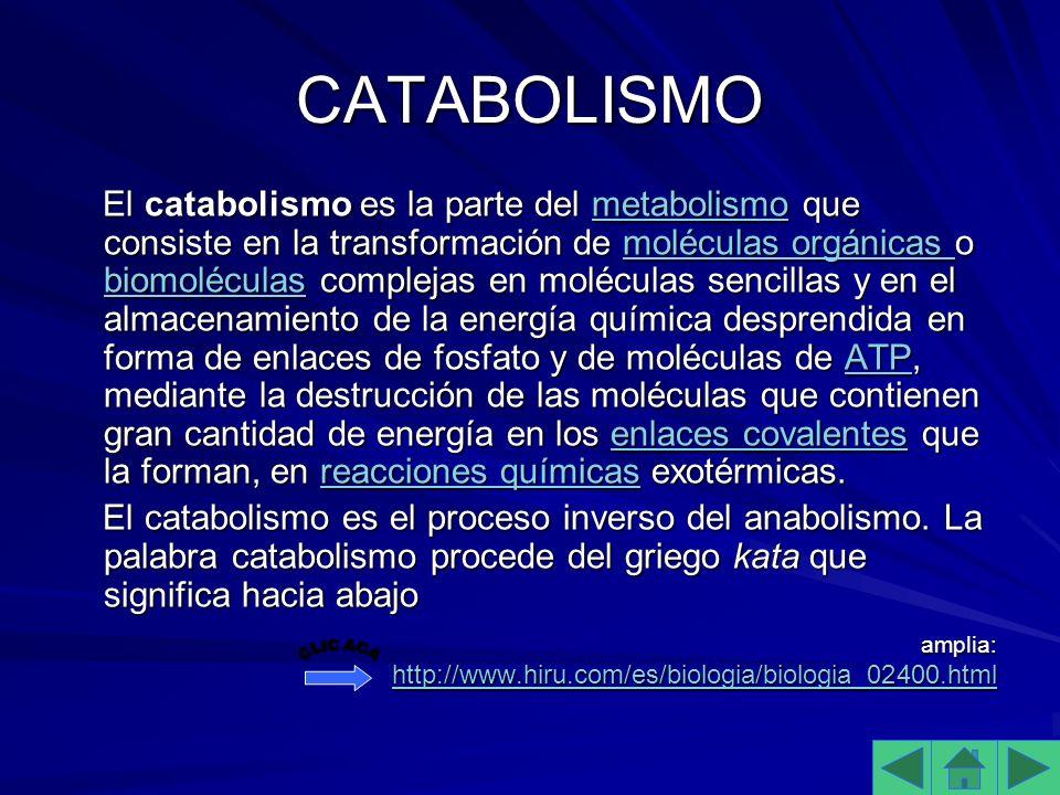 CATABOLISMO El catabolismo es la parte del metabolismo que consiste en la transformación de moléculas orgánicas o biomoléculas complejas en moléculas sencillas y en el almacenamiento de la energía química desprendida en forma de enlaces de fosfato y de moléculas de ATP, mediante la destrucción de las moléculas que contienen gran cantidad de energía en los enlaces covalentes que la forman, en reacciones químicas exotérmicas.
