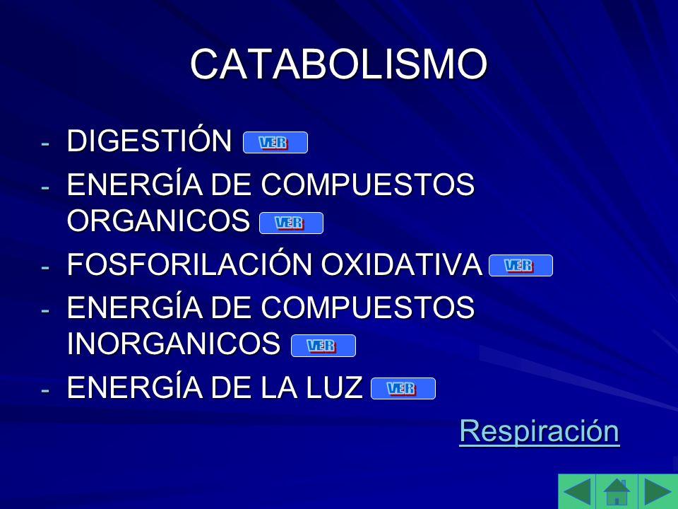 CATABOLISMO - DIGESTIÓN - ENERGÍA DE COMPUESTOS ORGANICOS - FOSFORILACIÓN OXIDATIVA - ENERGÍA DE COMPUESTOS INORGANICOS - ENERGÍA DE LA LUZ Respiración RespiraciónRespiración