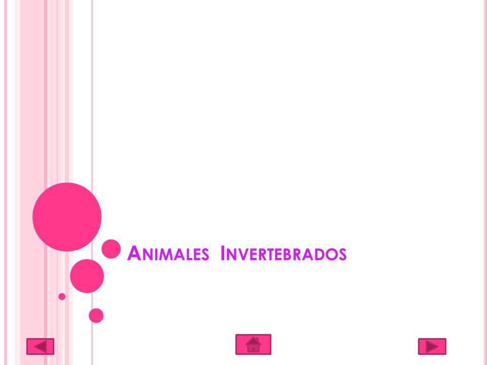 A NIMALES I NVERTEBRADOS