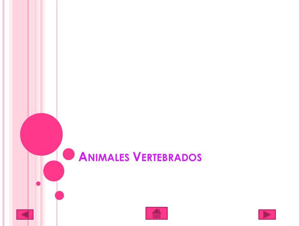 A NIMALES V ERTEBRADOS