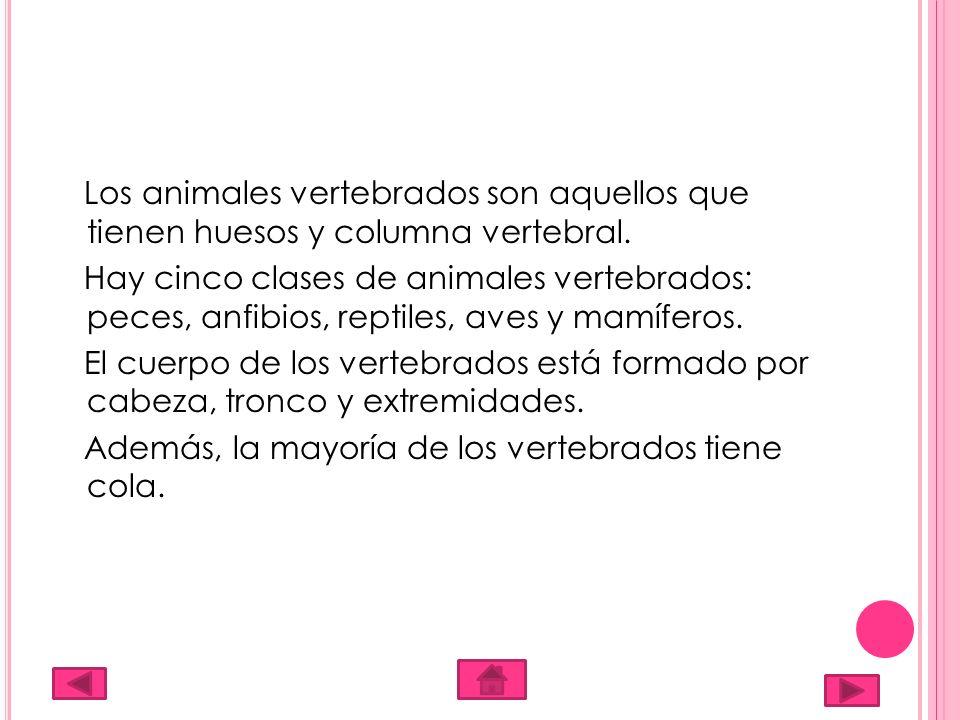 Los animales vertebrados son aquellos que tienen huesos y columna vertebral. Hay cinco clases de animales vertebrados: peces, anfibios, reptiles, aves