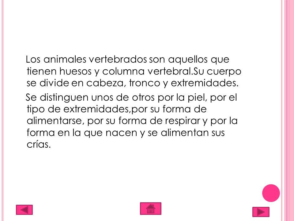 Los animales vertebrados son aquellos que tienen huesos y columna vertebral.Su cuerpo se divide en cabeza, tronco y extremidades. Se distinguen unos d