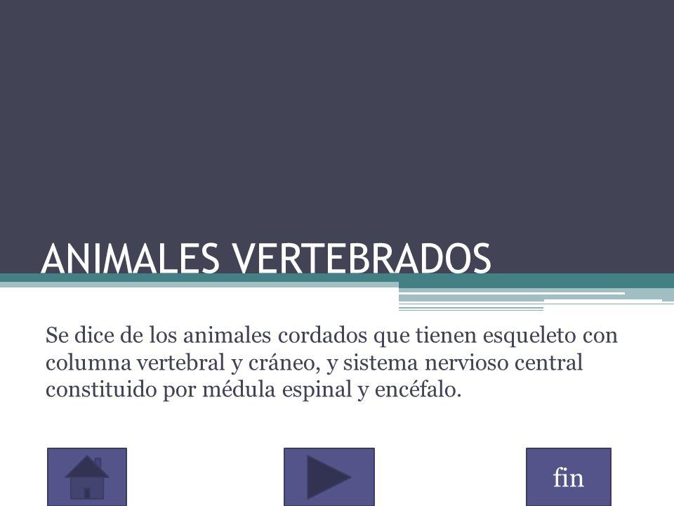 fin ANIMALES VERTEBRADOS Se dice de los animales cordados que tienen esqueleto con columna vertebral y cráneo, y sistema nervioso central constituido