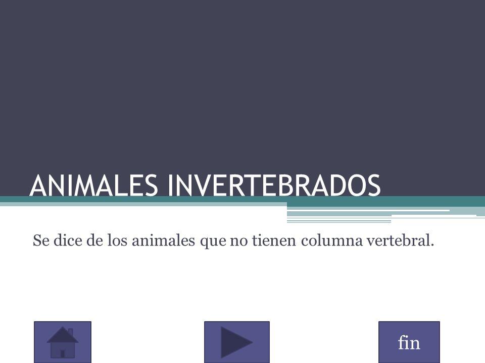 fin ANIMALES INVERTEBRADOS Se dice de los animales que no tienen columna vertebral.