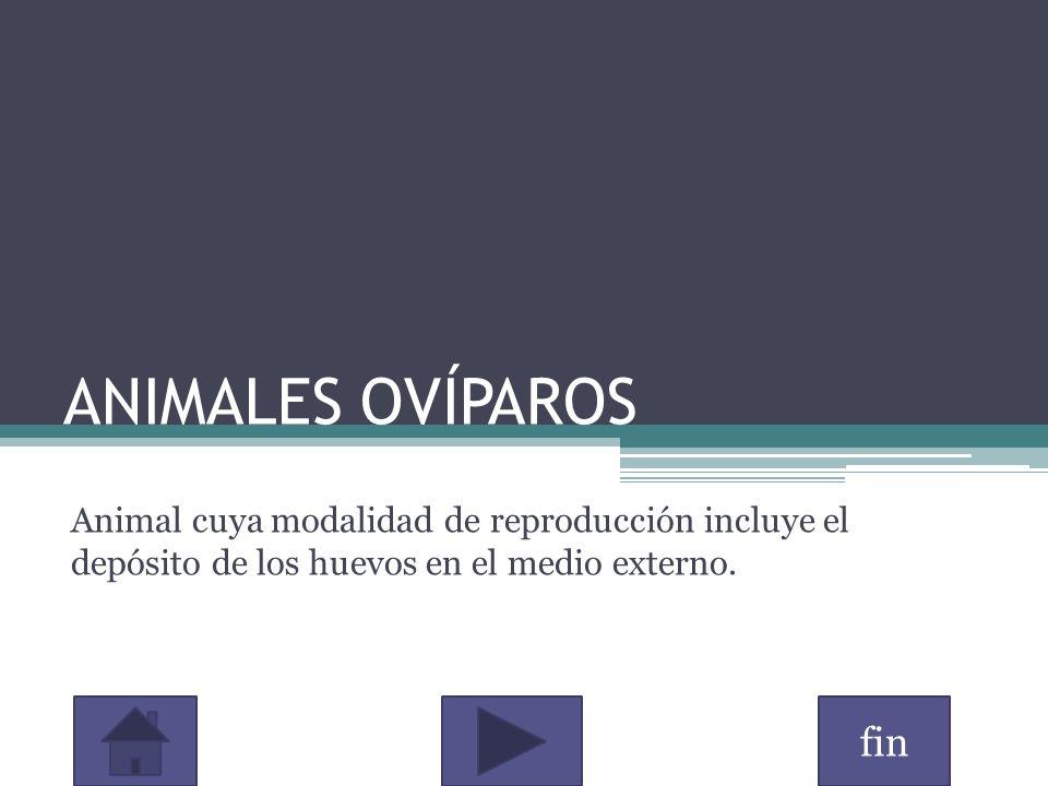 fin ANIMALES OVÍPAROS Animal cuya modalidad de reproducción incluye el depósito de los huevos en el medio externo.