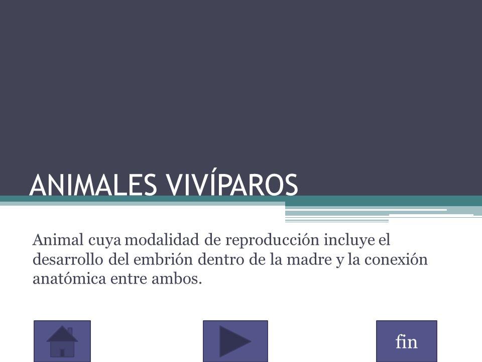 fin ANIMALES VIVÍPAROS Animal cuya modalidad de reproducción incluye el desarrollo del embrión dentro de la madre y la conexión anatómica entre ambos.