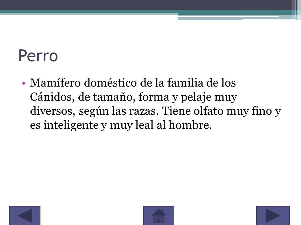 Perro Mamífero doméstico de la familia de los Cánidos, de tamaño, forma y pelaje muy diversos, según las razas. Tiene olfato muy fino y es inteligente