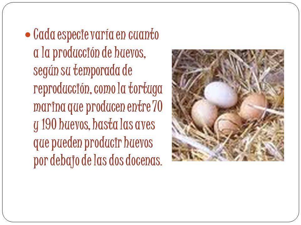Cada especie varía en cuanto a la producción de huevos, según su temporada de reproducción, como la tortuga marina que producen entre 70 y 190 huevos,