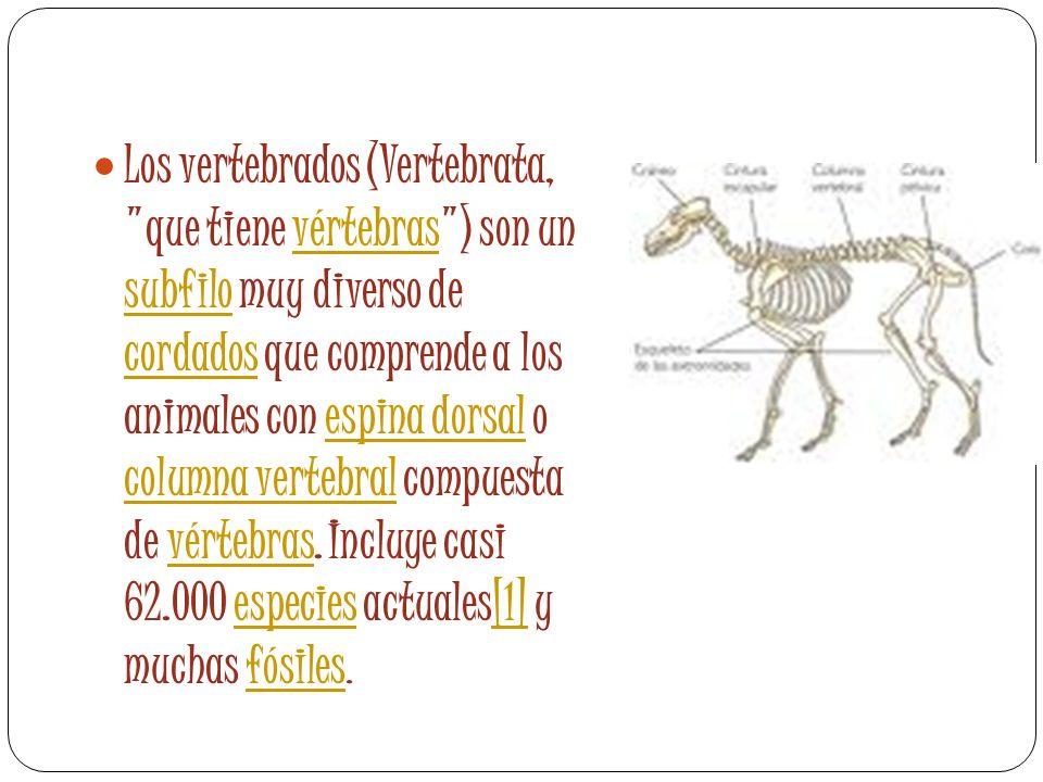 Los vertebrados (Vertebrata,