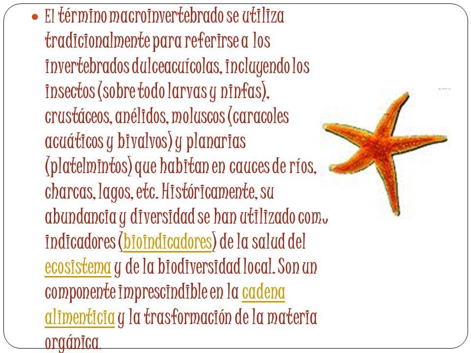 El término macroinvertebrado se utiliza tradicionalmente para referirse a los invertebrados dulceacuícolas, incluyendo los insectos (sobre todo larvas