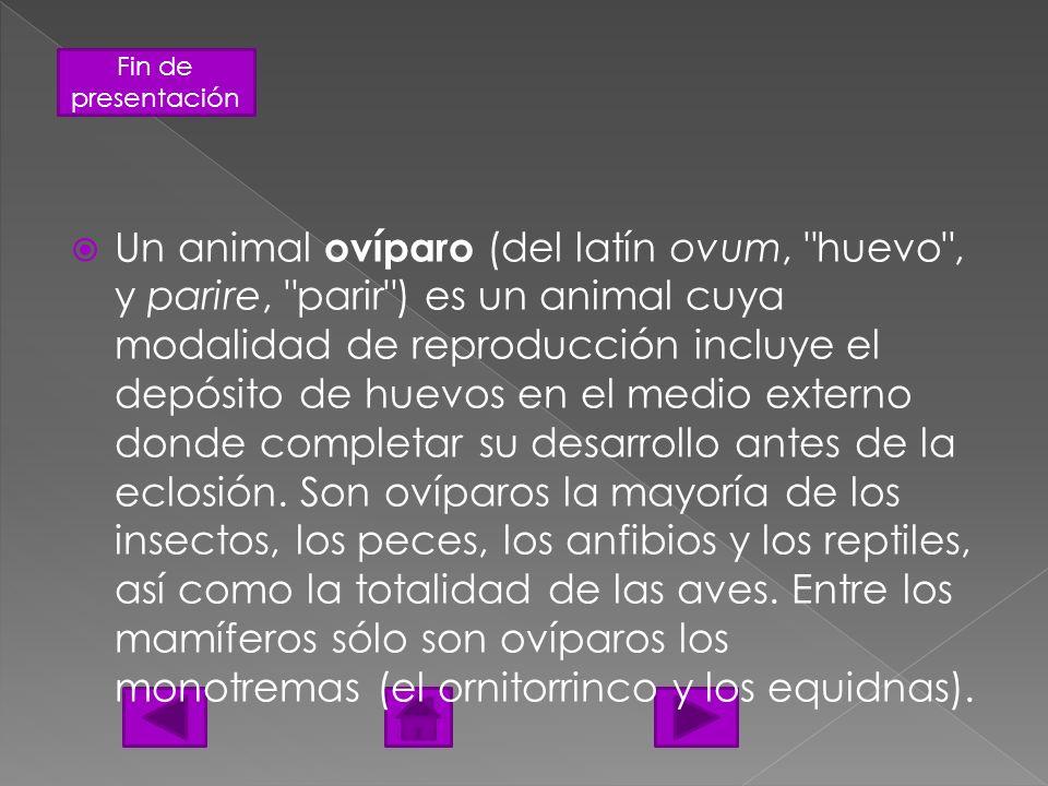 Fin de presentación Un animal ovíparo (del latín ovum,