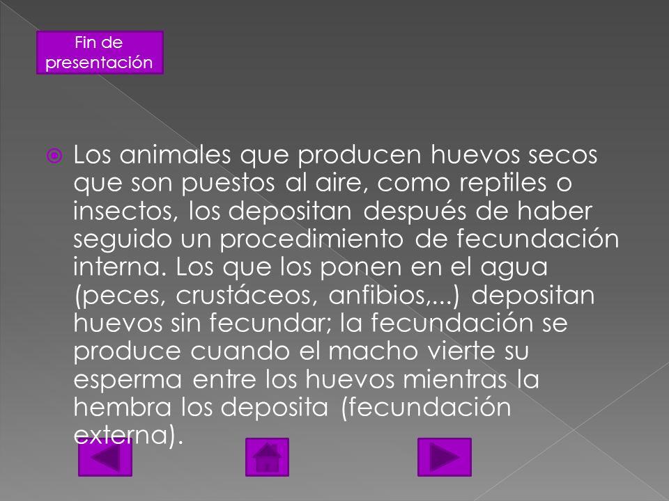 Fin de presentación Los animales que producen huevos secos que son puestos al aire, como reptiles o insectos, los depositan después de haber seguido u