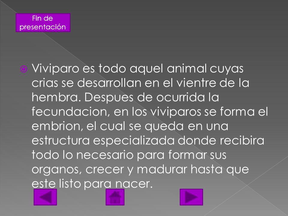 Fin de presentación Viviparo es todo aquel animal cuyas crias se desarrollan en el vientre de la hembra. Despues de ocurrida la fecundacion, en los vi