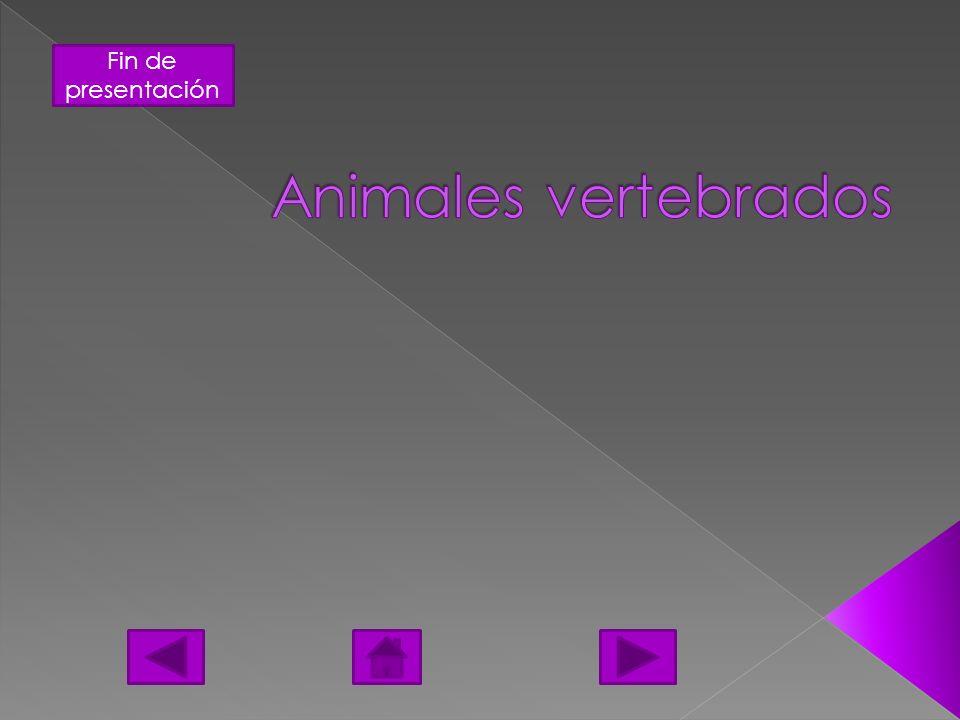 Fin de presentación Se les denomina animales ovíparos a todos aquellos cuyas hembras ponen huevos, así como los reptiles, los anfibios y las aves.