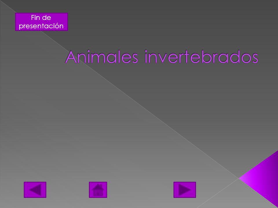 Fin de presentación Se llama colectivamente invertebrados a todos aquellos animales (reino Animalia) que no se encuadran dentro del subfilo de los vertebrados (Vertebrata) del filo cordados (Chordata).