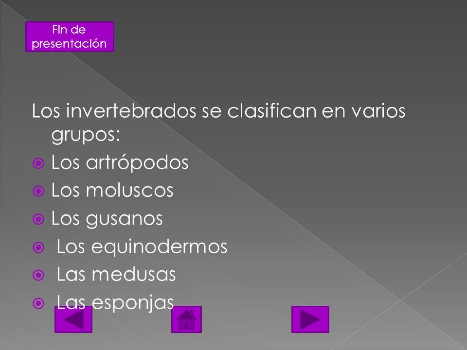 Fin de presentación Los invertebrados se clasifican en varios grupos: Los artrópodos Los moluscos Los gusanos Los equinodermos Las medusas Las esponja