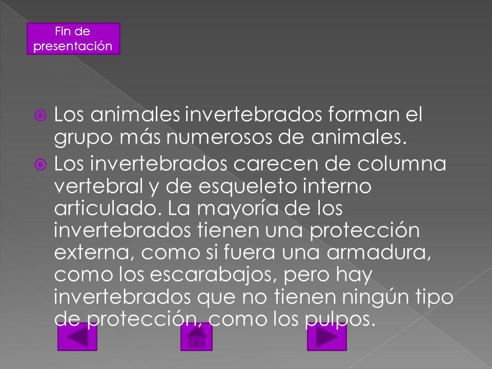 Fin de presentación Los animales invertebrados forman el grupo más numerosos de animales. Los invertebrados carecen de columna vertebral y de esquelet