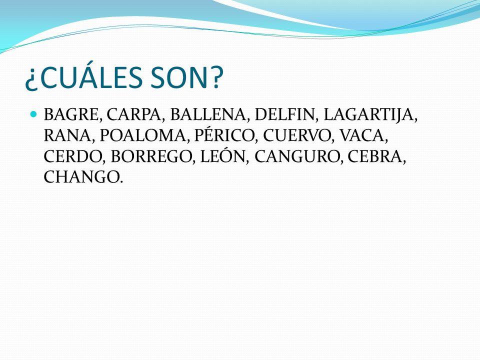 ¿CUÁLES SON? BAGRE, CARPA, BALLENA, DELFIN, LAGARTIJA, RANA, POALOMA, PÉRICO, CUERVO, VACA, CERDO, BORREGO, LEÓN, CANGURO, CEBRA, CHANGO.