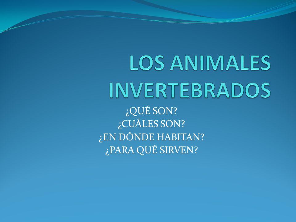 ¿QUÉ SON? DICESE DE LOS ANIMALES QUE NO TIENEN VERTEBRAS.