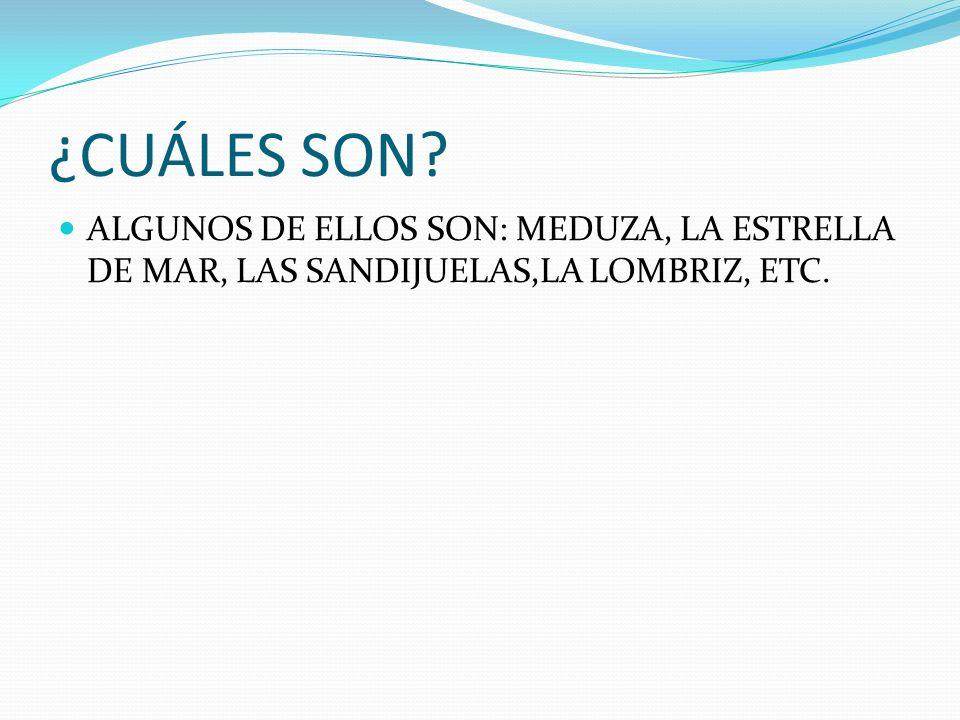 ¿CUÁLES SON? ALGUNOS DE ELLOS SON: MEDUZA, LA ESTRELLA DE MAR, LAS SANDIJUELAS,LA LOMBRIZ, ETC.