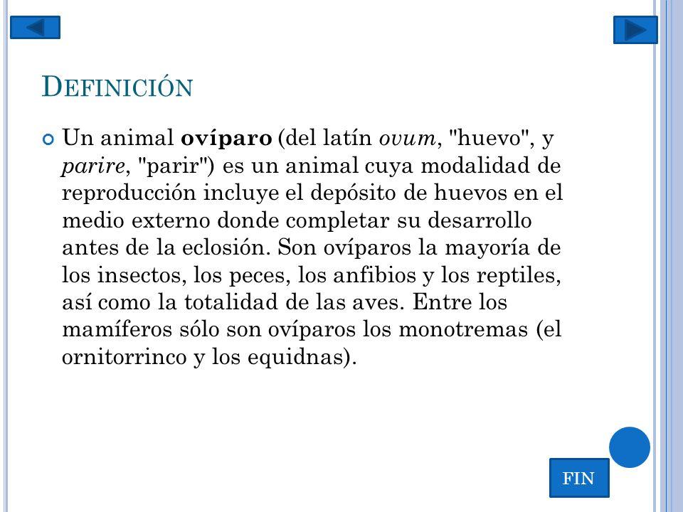 D EFINICIÓN Un animal ovíparo (del latín ovum,
