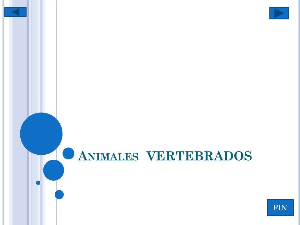 V ERTEBRADOS ….Que significa el termino vertebrados.
