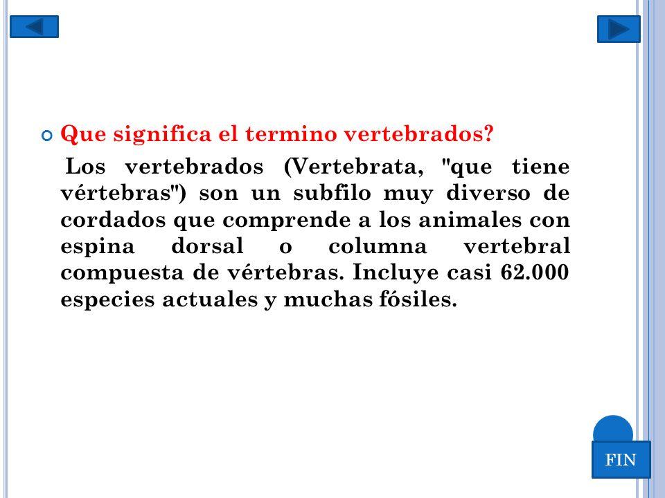 V ERTEBRADOS …. Que significa el termino vertebrados? Los vertebrados (Vertebrata,