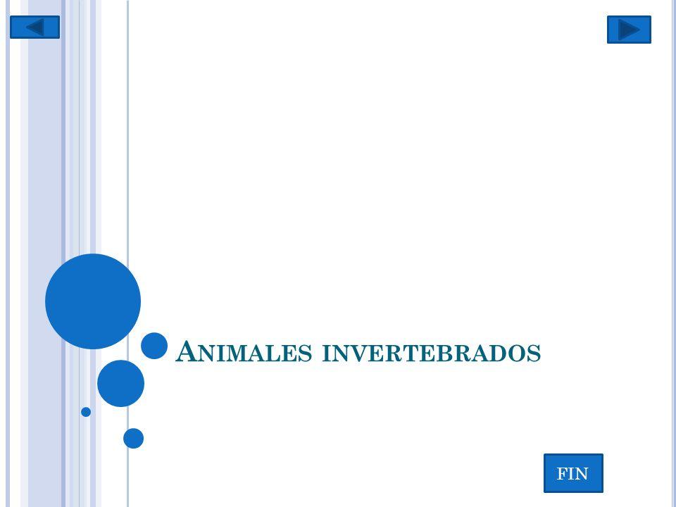 DEFINICIÓN Se llama colectivamente invertebrados a todos aquellos animales (reino Animalia) que no se encuadran dentro del subfilo de los vertebrados (Vertebrata) del filo cordados (Chordata).
