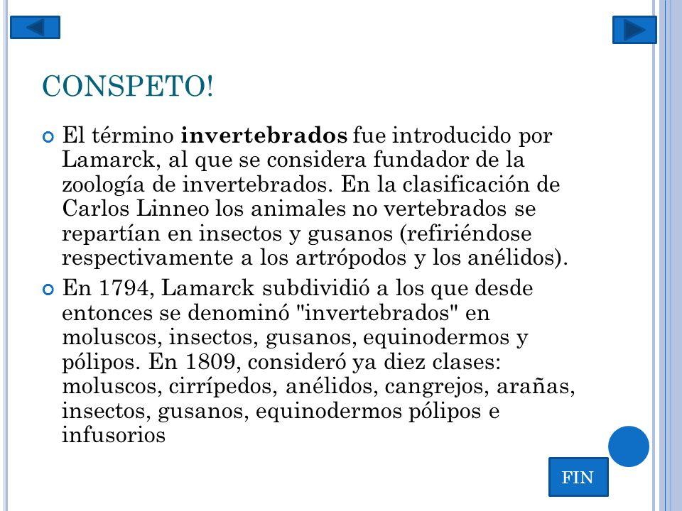 CONSPETO! El término invertebrados fue introducido por Lamarck, al que se considera fundador de la zoología de invertebrados. En la clasificación de C