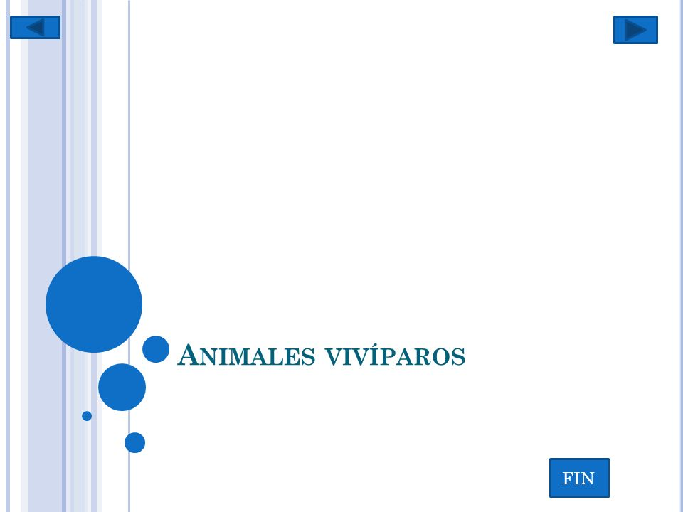 V IVÍPARO ( DEL LATÍN VIVUS, VIVO , Y PARIRE, PARIR ) es todo aquel animal cuyo embrión se desarrolla en el vientre de la hembra.