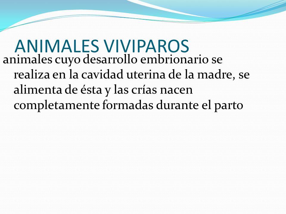 ANIMALES VIVIPAROS animales cuyo desarrollo embrionario se realiza en la cavidad uterina de la madre, se alimenta de ésta y las crías nacen completame