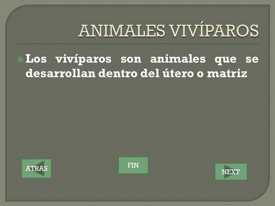 ATRAS NEXT FIN Los vivíparos son animales que se desarrollan dentro del útero o matriz