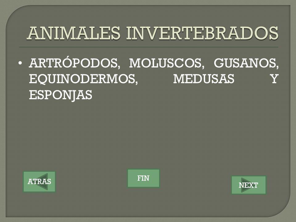 ATRAS NEXT FIN ARTRÓPODOS, MOLUSCOS, GUSANOS, EQUINODERMOS, MEDUSAS Y ESPONJAS