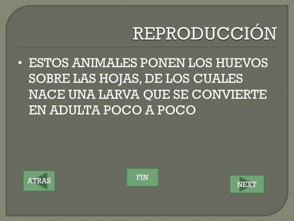 ATRAS NEXT FIN ESTOS ANIMALES PONEN LOS HUEVOS SOBRE LAS HOJAS, DE LOS CUALES NACE UNA LARVA QUE SE CONVIERTE EN ADULTA POCO A POCO