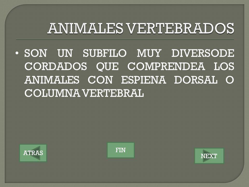 ATRAS NEXT FIN SON UN SUBFILO MUY DIVERSODE CORDADOS QUE COMPRENDEA LOS ANIMALES CON ESPIENA DORSAL O COLUMNA VERTEBRAL
