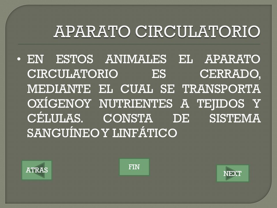 ATRAS NEXT FIN EN ESTOS ANIMALES EL APARATO CIRCULATORIO ES CERRADO, MEDIANTE EL CUAL SE TRANSPORTA OXÍGENOY NUTRIENTES A TEJIDOS Y CÉLULAS. CONSTA DE