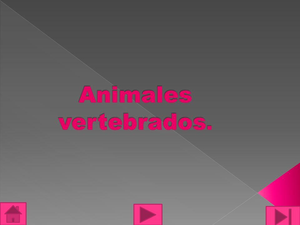 Los vertebrado: son aquellos animales que tienen una columna vertebral.